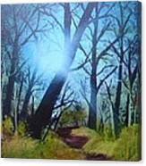 Forest Sunlight Canvas Print