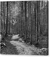 Forest Trail Bw Canvas Print