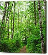 Forest Trail To Follow Canvas Print