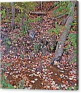 Forest Trickle Canvas Print
