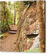 Forest Walk 15 Canvas Print