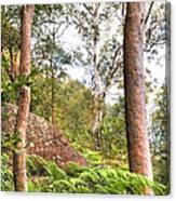 Forest Walk 16 Canvas Print