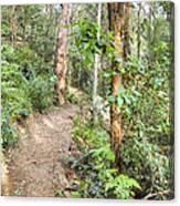 Forest Walk 17 Canvas Print