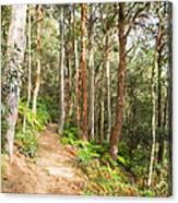 Forest Walk 19 Canvas Print