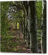 Forest Walk Hdr Canvas Print