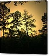 Forest Waltz Canvas Print