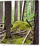 Forest With Moss-covered Rocks Along John's Lake Trail In Glacier Np-mt Canvas Print