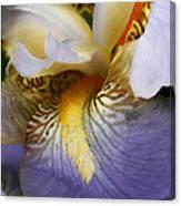 Forever Iris  Canvas Print
