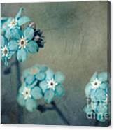 Forget Me Not 01 - S22dt06 Canvas Print