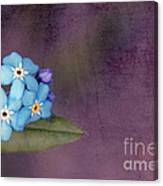 Forget Me Not 02 - S0304bt02b Canvas Print