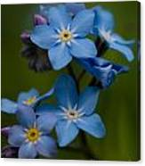 Forget Me Not Flower Canvas Print