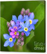 Forget-me-not Stylized Canvas Print