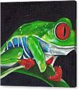 Forgotten Frog Canvas Print