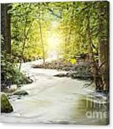 Forrest Stream Canvas Print