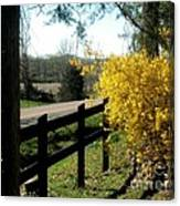 Forsythia Along The Highway Canvas Print