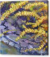 Forsythia Creek Canvas Print
