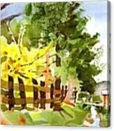 Forsythia In Bloom Canvas Print