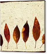 Forsythia Leaves In Fall Canvas Print