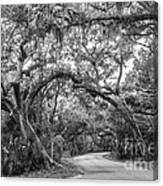 Fort Clinch Live Oaks Canvas Print
