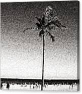 Fort Lauderdale Palm Tree Canvas Print