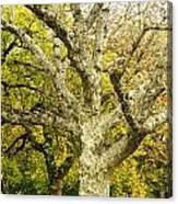 Fort Worth Japanese Gardens-041 Canvas Print