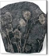 Fossil Crinoids Canvas Print