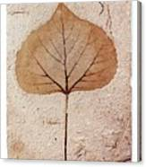 Fossil Leaf Canvas Print