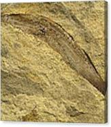 Fossil Leaves Canvas Print