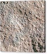 Fossiliferous Limestone Canvas Print