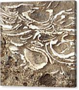 Fossils Layered In Sand And Rock Canvas Print