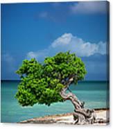 Fototi Tree - Aruba Canvas Print