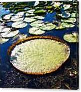 Foul Ball And The Lily Pads Canvas Print