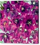 Found Rose - Photopower 1742 Canvas Print