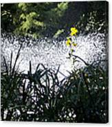 Fountain And Spring Flowers Canvas Print