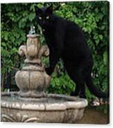 Fountain Cat Canvas Print