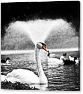 Fountain Swan Canvas Print