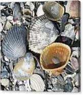Four Beautiful Shells Canvas Print