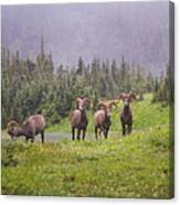 Four Brothers Canvas Print