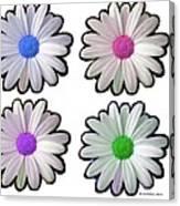 Four Daisy Hibrids Canvas Print