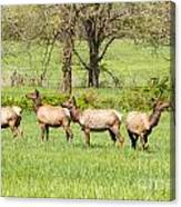 Four Elk Canvas Print