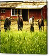 Four Horses Canvas Print