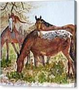 Four Horses Grazing Canvas Print