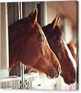 Four Horses In Stables Canvas Print