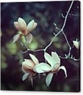 Four Magnolia Flower Canvas Print