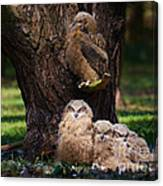 Four Owl Chicks In A Dark Forest Canvas Print