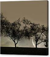 Four Trees And A Moon Canvas Print