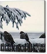 Four Turtle Doves Canvas Print