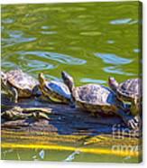 Four Turtles Canvas Print