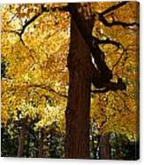 Four Yellow Trees  Canvas Print