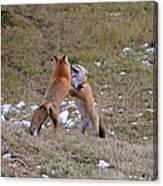 Fox Dance Canvas Print